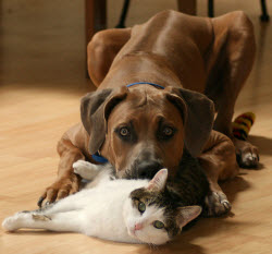 Dog and Cat - Frequently asked questions about your pet's dental care